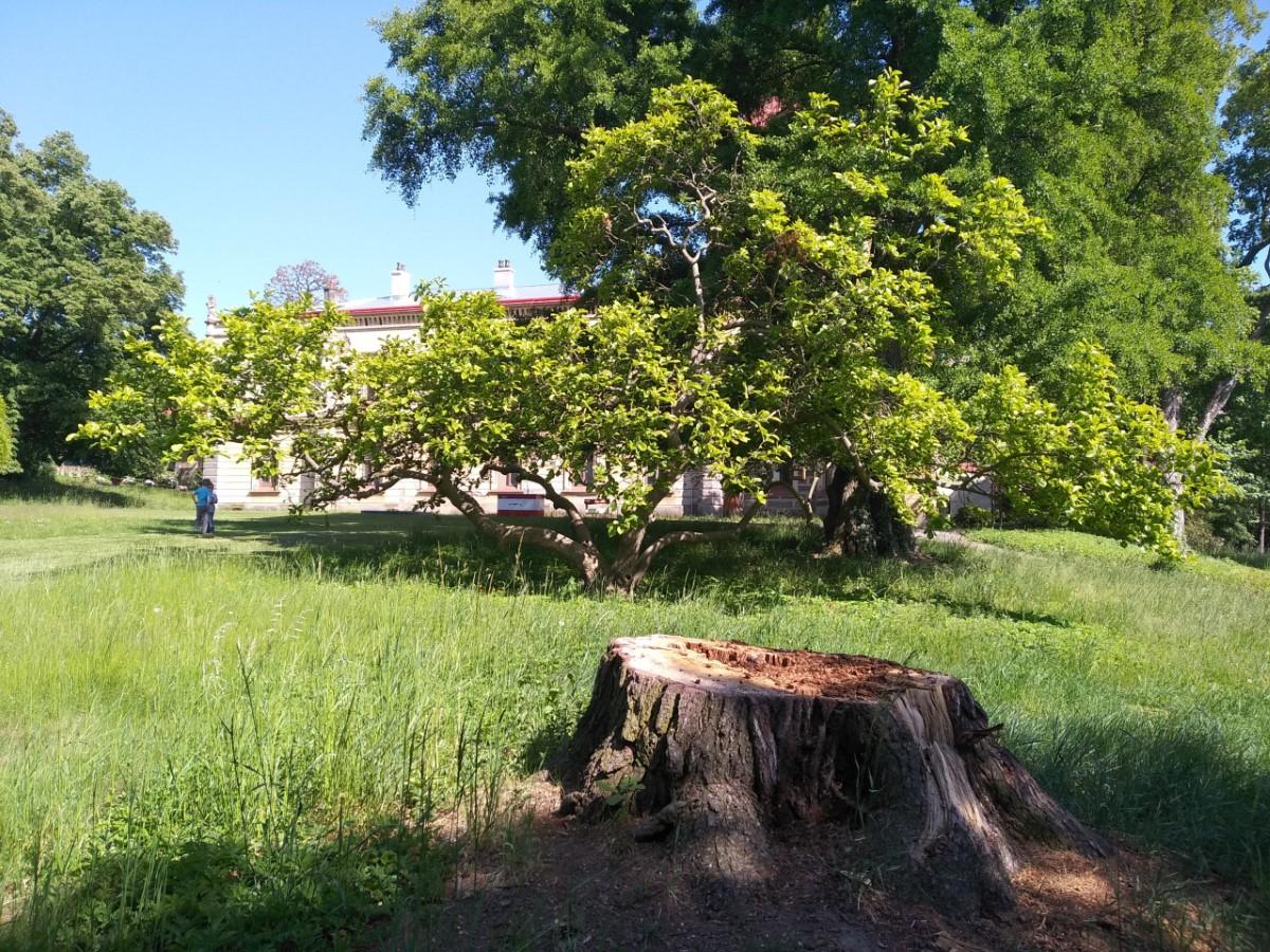 Obnova parku běží na plné obrátky